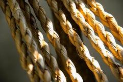 Producto del jacinto de agua imágenes de archivo libres de regalías