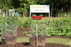 Producto que crece en jardín de la comunidad Foto de archivo