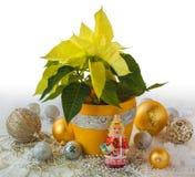 Productos de las decoraciones amarillas de la poinsetia y de la Navidad de la masa Fotos de archivo