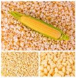 Productos del maíz Imagen de archivo