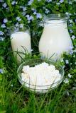 Productos lácteos en hierba Imagenes de archivo
