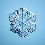 Productos naturales naturales de la macro del copo de nieve Foto de archivo libre de regalías