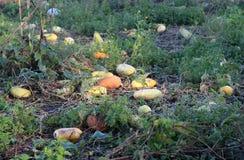 Productos vegetales orgánicos Foto de archivo libre de regalías
