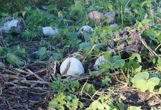 Productos vegetales orgánicos Imagen de archivo libre de regalías
