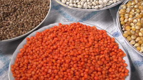Products Agribusiness. The camera moves past the small plates filling various kinds of grasses and legumes stock video footage