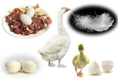 Products breeding geese Royalty Free Stock Images