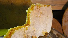 Products of livelihoods of bees. Products of beekeeping. stock video