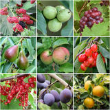 Products of orchard Royalty Free Stock Photography