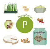 Products rich with phosphorus. A set of organic organic foods with a high content of vitamin Stock Illustration