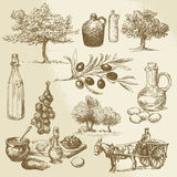 Produit de récolte et d'olive Photographie stock