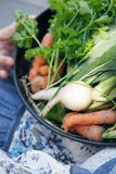 Produit-légumes frais de vegetables Photographie stock libre de droits
