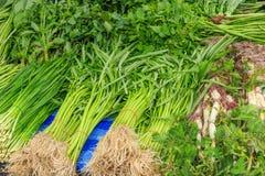 Produit-légumes frais de vegetables Photos libres de droits