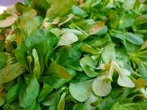 Produit-légumes frais de vegetables Image stock