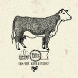 Produit naturel frais de ferme de vache Photographie stock