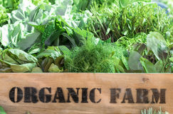 Produit organique frais dans la boîte en bois Image libre de droits