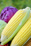Produits biologiques frais. Photo stock