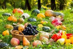 Produits d'automne photos libres de droits