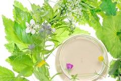 Produits de beauté et herbe Image stock