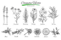 Produits de beauté normaux Vecteur tiré par la main Objets d'isolement sur le blanc Herbes et fleurs Le perforatum de fines herbe Images libres de droits