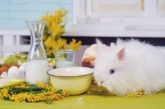 Produits de gâteau de Pâques sur la table verte avec des fleurs photo stock