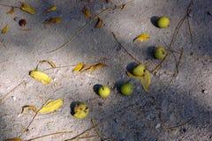 Produits de l'automne Images stock
