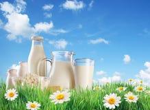 Produits laitiers sur l'herbe. photographie stock libre de droits