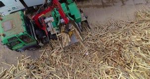Produkcja paliwo brykietuje Proces produkcji paliwo brykietuje Przemys?owy wielko?ciowy drewniany rozdrabniacz zbiory wideo