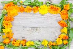 Produktaufkleber für Ringelblume Stockfoto