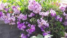 Produkter från min trädgård royaltyfri bild