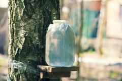 Produktion av bj?rken underminerar i exponeringsglaskrus arkivfoto