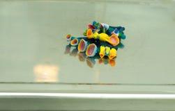 produktion av tand- implantat Royaltyfri Bild
