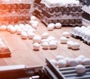 Produktionen av fega ägg, höns, fega ägg går till och med transportören för ytterligare sortering, närbilden, biltransporten, hön arkivfoto