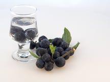 Produrre Prugnola-Gin Fotografie Stock