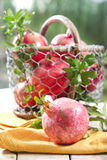 Produto de Autumn Season Pomegranate fotografia de stock