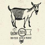Produto natural fresco da exploração agrícola da cabra Foto de Stock Royalty Free