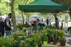 Produto orgânico fresco na venda no mercado local dos fazendeiros imagens de stock royalty free