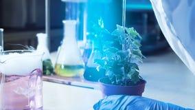 Produto químico deixando cair da pessoa da colheita na planta filme