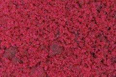Produto químico do fundo do marco do cloreto do cobalto Foto de Stock