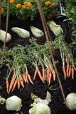 Produto vegetal pequeno da exibição do lote Imagens de Stock