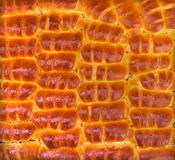 Produtos de forno fresco - apetitoso corado dos queques Imagem de Stock Royalty Free