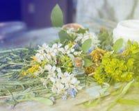 Produtos e ingredientes para o corpo e os cuidados com a pele Produtos de Eco Flores e plantas, óleos aromáticos orgânicos selec imagens de stock