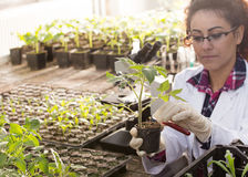 Produtos químicos de derramamento do biólogo no potenciômetro com broto imagem de stock royalty free