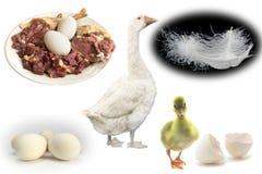 Produtos que produzem gansos Imagens de Stock Royalty Free