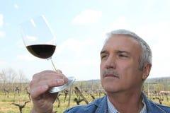 Produttore maturo del vino Immagine Stock