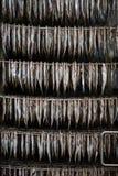 Produzione dei pesci secchi Immagini Stock
