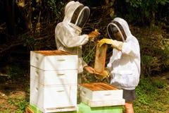 Produzione del miele nei Caraibi Fotografia Stock