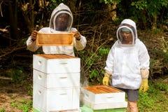 Produzione del miele nei Caraibi Immagini Stock Libere da Diritti