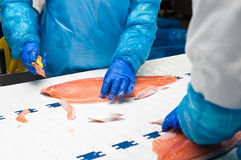 Produzione del salmone dello stabilimento di trattamento del pesce fotografia stock libera da diritti