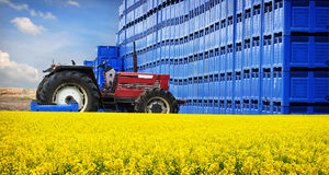 Produzione dell'azienda agricola di agricoltura Immagini Stock Libere da Diritti