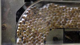 Produzione dell'industria del tabacco stock footage